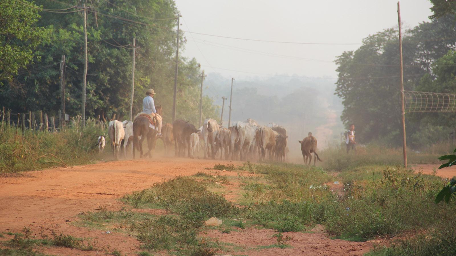 Projekt_Paraguay_Landwirtschaft_Slider_01