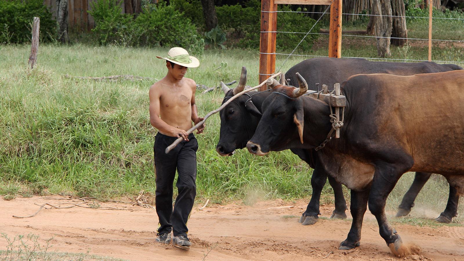 Projekt_Paraguay_Landwirtschaft_Slider_06